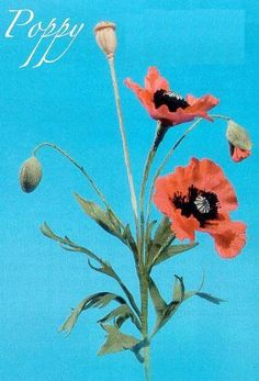 gum paste poppy flowers | How to make poppys using gumpaste
