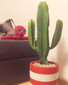 Cacto no vaso Gabriela customizado com cinza e cereja atendendo a um pedido especial. Quer um? Fale com a gente!  #oitominhocas #cactus #cactilove #vasogabriela #decoracao #maisverde