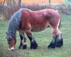 I saw him grazing as I was on a morning walk not far from home . The Magicians Nephew, Work Horses, Horse Pictures, Farm Animals, Google Search, Pictures Of Horses, Equine Photography, Chicken Scratch Embroidery