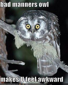 Funny owl w/ caption.