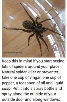 Mix this stuff up and bye bye spiders