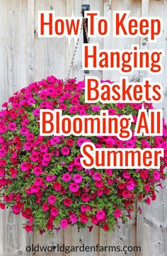 Put life back into your worm out hanging baskets and potted plants. Tips on how to keep them looking good all summer long! #hangingbaskets #pottedplants #flowers #landscape #flower #soil #compost #oldworldgardenfarms