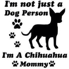 I'm not just a dog person. I'm a Chihuahua mommy. (A very old Chihuahua, but he'll always be my puppy! Raza Chihuahua, Chihuahua Quotes, Teacup Chihuahua, Chihuahua Love, Chihuahua Puppies, Dog Quotes, I Love Dogs, Puppy Love, Cute Dogs