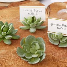 Succulent PlaceCard Holder for Engagement, Bridal shower, Rehearsal dinner, Wedding, Adult birthday (($))