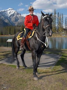 tend to use Morgan horses, these horses are smart, strong, powerful and have great stamina. They are affectionate as well as fearless. Alaska, Largest Countries, Countries Of The World, Vancouver, Calgary, All About Canada, Canadian Horse, Police, Jamaica