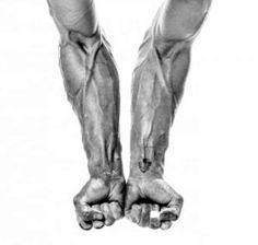 Alton-Richardson-Forearms