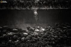 Tanzania. Primo premio categoria Natura. - (Nicole Cambré, National Geographic)