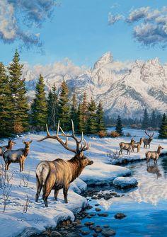 cerfs, biches, faons, chevreuils en peinture et illustrations - Darrell Bush Elk Pictures, Deer Photos, Pictures To Paint, Nature Pictures, Wildlife Paintings, Wildlife Art, Landscape Paintings, Acrylic Paintings, Wild Life