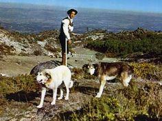 1960. Mastines en la Sierra de la Estrella.