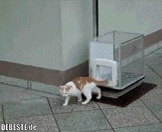 (no title) - Gatos - Chien I Love Cats, Cute Cats, Funny Cats, Funny Animals, Cute Animals, Crazy Cat Lady, Crazy Cats, Pillos, Gatos Cats