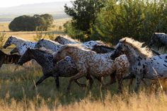 Horse Heaven: Photo