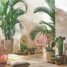 Plants make a room