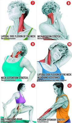 Scandal Bayou Beauty — stephfitblr: this is super helpful! Muscle Stretches, Posture Exercises, Sport Fitness, Yoga Fitness, Health Fitness, Neck And Shoulder Pain, Muscle Anatomy, Yoga Posen, Bodybuilding Workouts