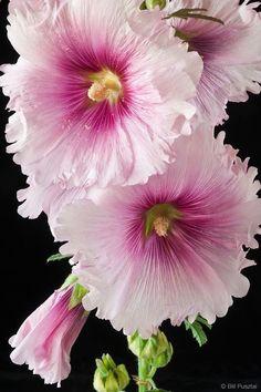 flowers in flower garden Exotic Flowers, Amazing Flowers, Colorful Flowers, Pink Flowers, Beautiful Flowers, Beautiful Gorgeous, Tall Flowers, Flower Photos, Planting Flowers