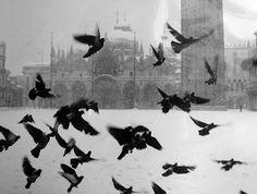 GIANNI BERENGO GARDIN  Venezia, 1960