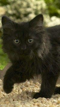 Czarny Kotek Tapety Na Telefon Tapeciarniapl Kittens Cats I