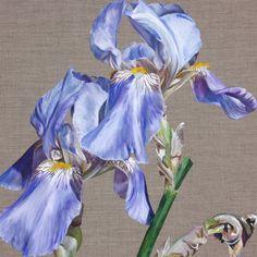 Flower Paintings by Sarah Caswell  Blue Beard I