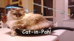 Cat-in-Pan!