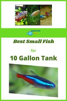 Betta Aquarium, Betta Fish, 10 Gallon Fish Tank, Fish List, Small Fish, Aquarium Design, Beautiful Fish, New Hobbies, Purpose