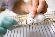 Presentacion de los lineamientos para el proceso de evaluacion etica de investigaciones que involucren el uso de animales