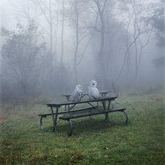 Owl Picnic  photo: Simen Johan