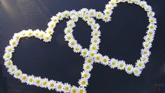 Love Heart Of Daisies Happy Valentines Day Wallpaper