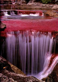 "Caño Cristales is also known as ""the river of five colors,"" and it's considered to be the most beautiful river in the world. During Colombia's wet season, the water flows fast and deep, obscuring the bottom of the river and. What A Wonderful World, Beautiful World, Beautiful Places, Amazing Places, Amazing Photos, Simply Beautiful, Wonderful Places, All Nature, Amazing Nature"