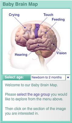 Baby brain map. Click on a hotspot to reveal questions to find out how a baby's brain develops during this period of brain growth. You'll also learn what you can do to enrich a very young child's development.