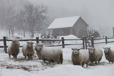 photograph by Kristin Nicholas... wish I could say I took this beautiful photograph. Also I believe the photgraph is of her farm.... sheep.