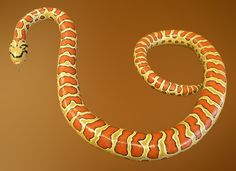 Painted Snake Gourd Hand <b>painted gourds</b> - elite gallery