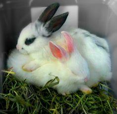 A world of Bunnies