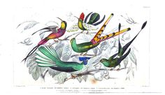 Hummingbirds. A History of the Earth and Animated Nature, Vol. 2, by Oliver Goldsmith