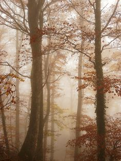 Misty forest in the fall.