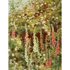 Old Fashioned Flowers 1906 Fox-glove & Dog-rose Canvas Art - George S Elgood (24 x 36)