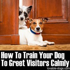 How To Train Your Dog To Greet Visitors Calmly...nobody likes a jumpy dog at the door.