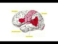 Cerebro, Música y Lenguaje 3/4 - Producción e Interpretación - Prof. Man... Animals, Brain, Animales, Animaux, Animal, Animais