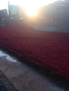 The tower poppies were one of the most incredible London memorials - stunning and thought provoking