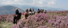 Camino de Santiago on Horseback | Walking the Camino de Santiago
