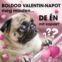 Boldog Valentin-napot mopszosok   mopszos cuccok