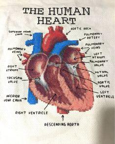 Anatomical heart cross stitch                                                                                                                                                                                 More