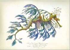 Seahorse LEAFY SEA DRAGON original LARGE print handworked SIGNED limted edition