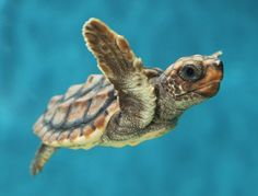 The Daily Cute: Shellebrate World Turtle Day!