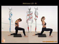 2 - Svalové řetězce Reflexology, Pilates, Health Fitness, How To Plan, Sports, Maine Coon, Stretching, Physical Therapy, Anatomy