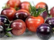 Blue Berries Tomato Seeds | Baker Creek Heirloom Seed Co | 1 per square | start seeds indoors 2/24