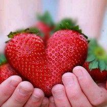 My favourite fruit..