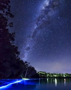 Something Beautiful And Supernatural Happened At A Beach In Australia   Bioluminescent Plankton 4