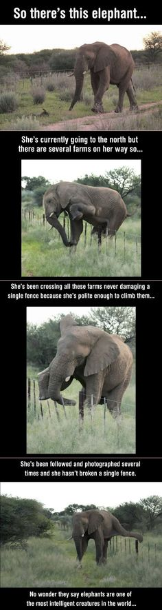 Elephant - Take note people! This elephant is smarter, and more considerate than…
