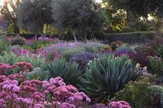 Gardening Ideas 11 Gorgeous Drought-Friendly Landscapes via - See the 11 drought-friendly landscapes are so simple to implement. Being water-conscious has never looked so good. Australian Native Garden, Australian Garden Design, Dry Garden, Garden Plants, Backyard Plants, Garden Water, Flowering Plants, Gravel Garden, Blue Garden