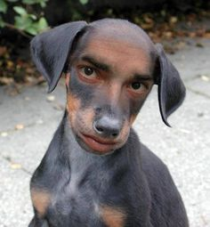 It's said dog looks like his owner. True or False