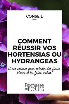 Comment bien cultiver les hortensias ou hydrangea, obtenir des fleurs bleues ou les faire sécher... Suivez nos conseils et astuces !